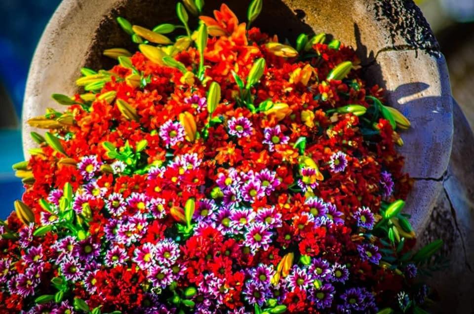 """Festivalul """"FlorAr"""". Figurine din mii de flori, muzică și dansuri stradale"""
