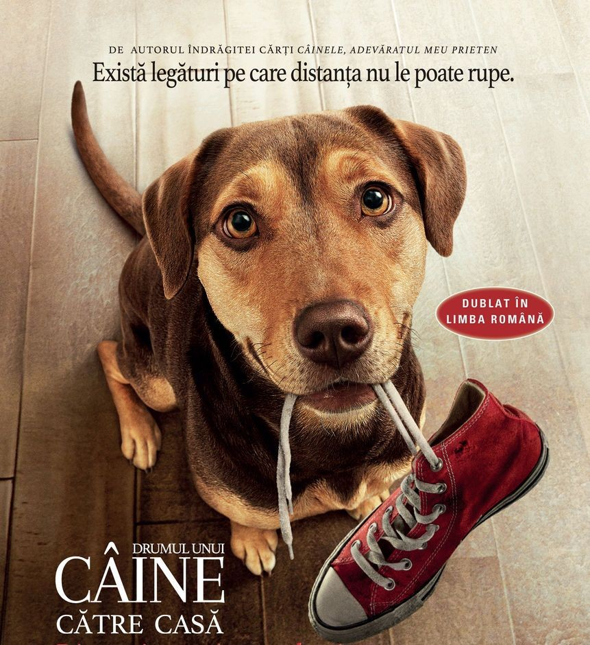 """Filmul """"Drumul unui câine către casă"""", în grădina de vară de la cinematograful din Grădiște"""